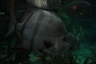 20110225 Shedd Aquarium 026