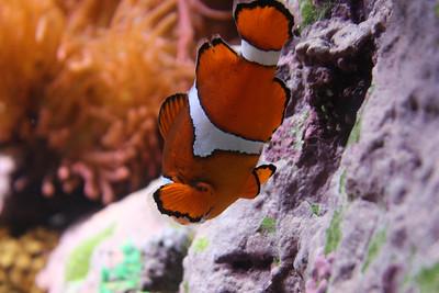 20110225 Shedd Aquarium 946