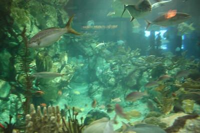 20110225 Shedd Aquarium 012