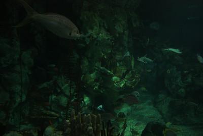 20110225 Shedd Aquarium 029