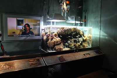 20110225 Shedd Aquarium 965