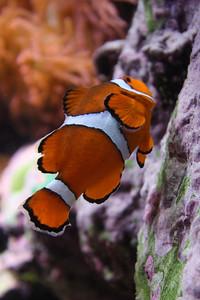 20110225 Shedd Aquarium 950