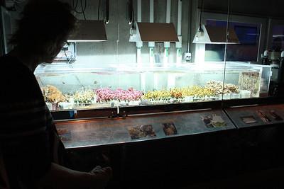 20110225 Shedd Aquarium 964