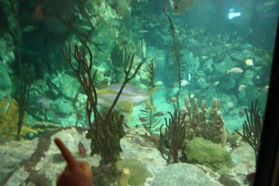 20110225 Shedd Aquarium 006