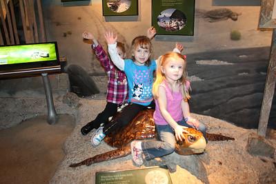 20110225 Shedd Aquarium 960