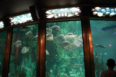 20110225 Shedd Aquarium 971