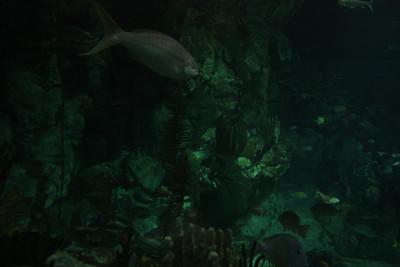 20110225 Shedd Aquarium 028