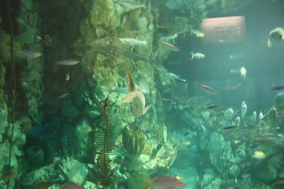 20110225 Shedd Aquarium 010