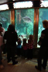 20110225 Shedd Aquarium 019
