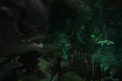 20110225 Shedd Aquarium 027