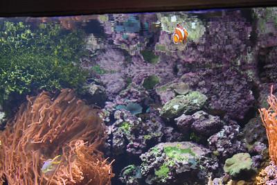 20110225 Shedd Aquarium 942