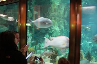 20110225 Shedd Aquarium 018