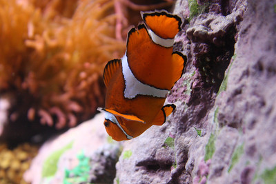 20110225 Shedd Aquarium 945
