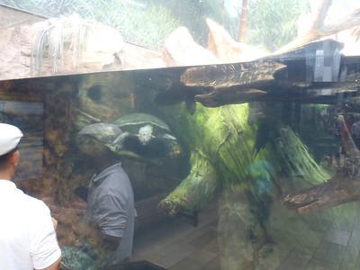 Shedd Aquarium-Chicago 071 (2)