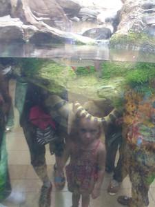 Shedd Aquarium-Chicago 072 (2)