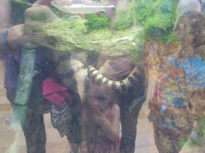 Shedd Aquarium-Chicago 073 (2)