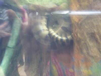 Shedd Aquarium-Chicago 077 (2)