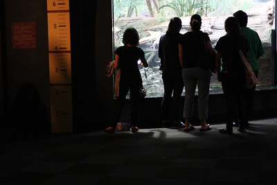 Shedd Aquarium-Chicago 406