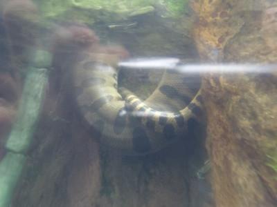 Shedd Aquarium-Chicago 075 (2)