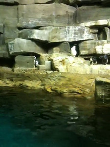20110701 Shedd Aquarium