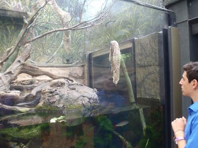 Shedd Aquarium-Chicago 078 (2)