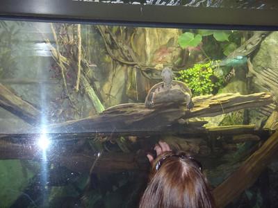 Shedd Aquarium-Chicago 070 (2)