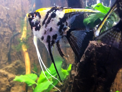Gold marble female