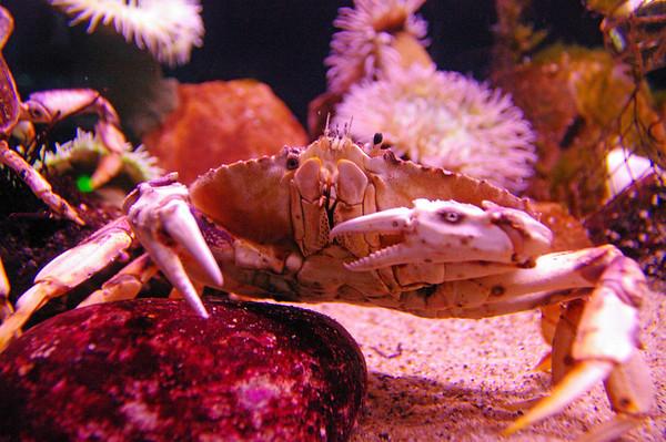 Aquarium by the Bay - San Francisco
