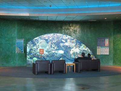 Aquarium of the Pacific - 5/14/12 Penguins