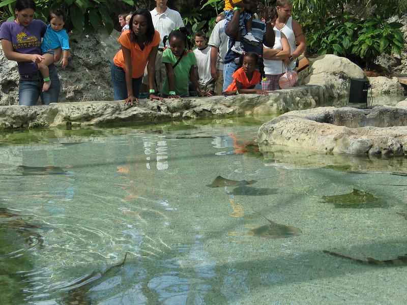 Chattanooga Tenneessee Aquarium Ocean Journey