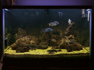 New lighting on the cichlid tank