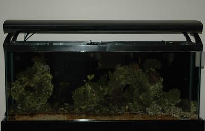 55 Gallon Aquarium - August 2006