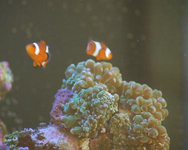 55 Gallon Aquarium - November 2006