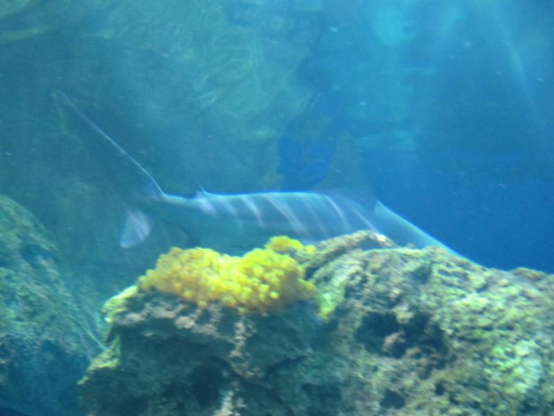 2011May28DenverAquarium54