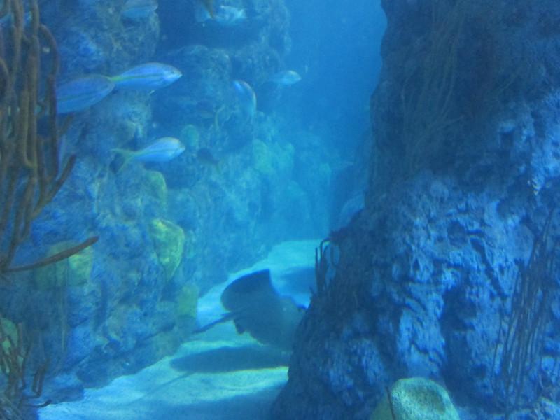2011May28DenverAquarium32