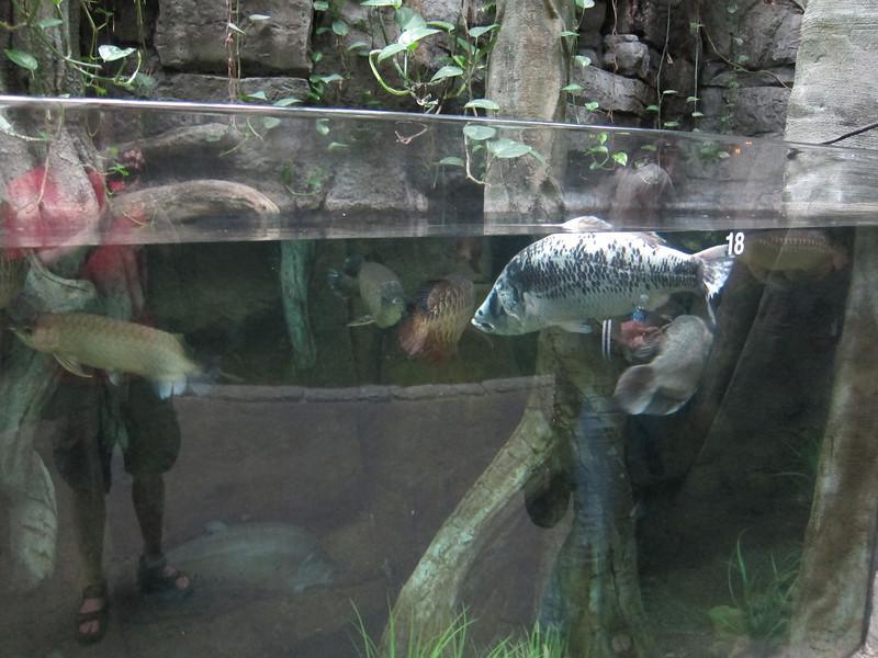 2011May28DenverAquarium46