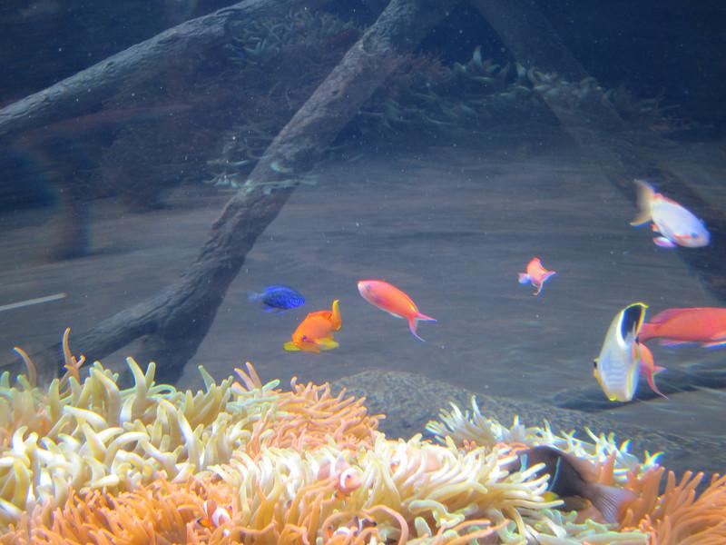 2011May28DenverAquarium52