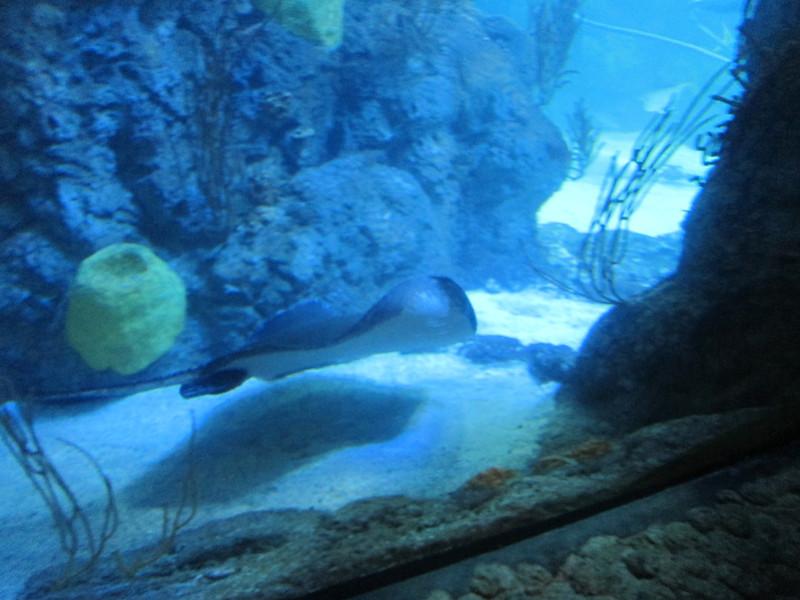 2011May28DenverAquarium35