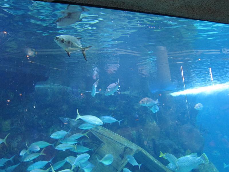 2011May28DenverAquarium7