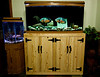 This is the new stand I made with the old 72 gallon bow front tank on it.  We bought some small fish for the African Cichlid tank and needed to set up the old 20 gallon hex tank until they grow big enough to survive in the new 150 gallon.  The Oscars moved from a 29 gallon high tank to this one.  They are VERY HAPPY.