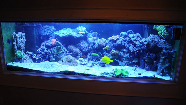 fishtank video