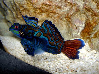 GA Aquarium 02/06