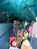 This tunnel is so neat.  The fish swim over your head - including the 2 huge whale sharks!  Henry was terrified and would not walk through the tunnel.  Scuba divers were cleaning the plexiglass when we went through.