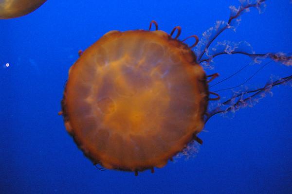 Monterey Bay Aquarium 2006