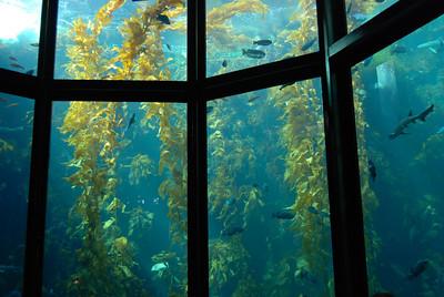 Monterey Bay Aquarium: 9/26/09