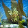 aquarium-14