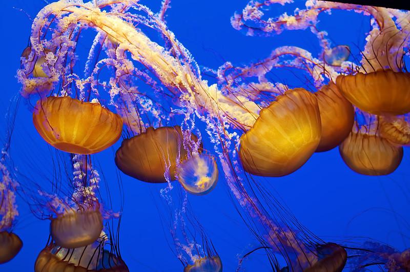 Monterey Bay Aquarium - (4)