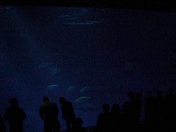 Huge shark tank!