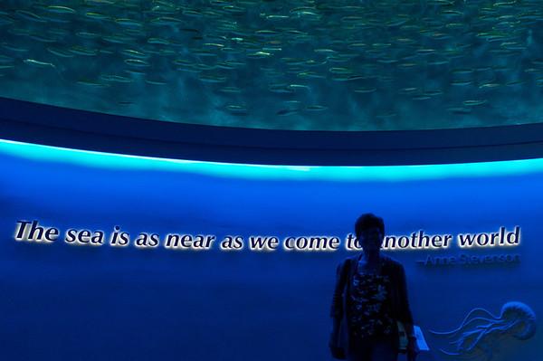 This aquarium is definitely other worldly