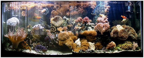 My 55 Gallon Reef
